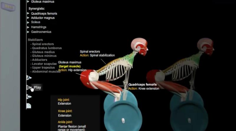 Anatomía del peso muerto \