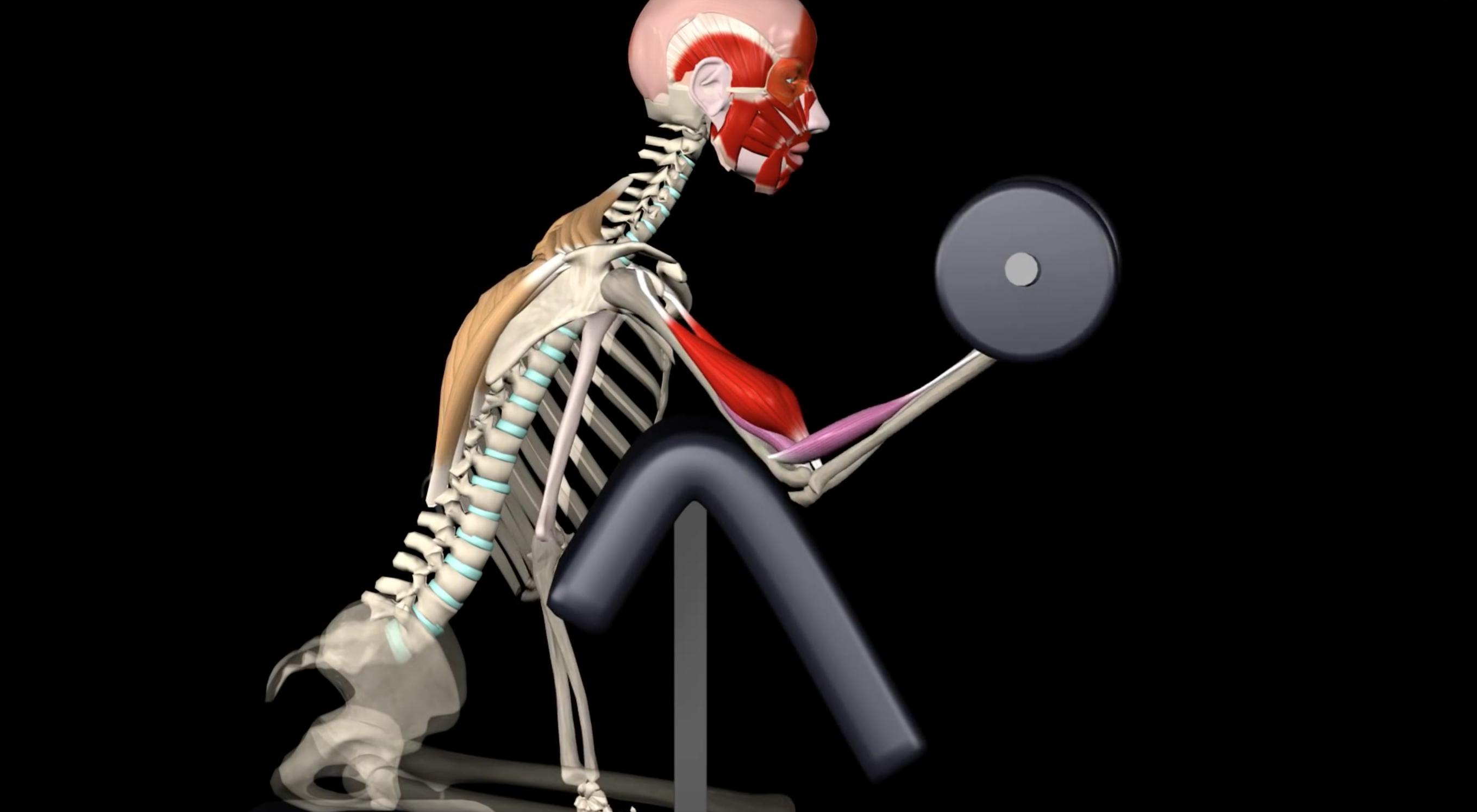 Anatomía del \