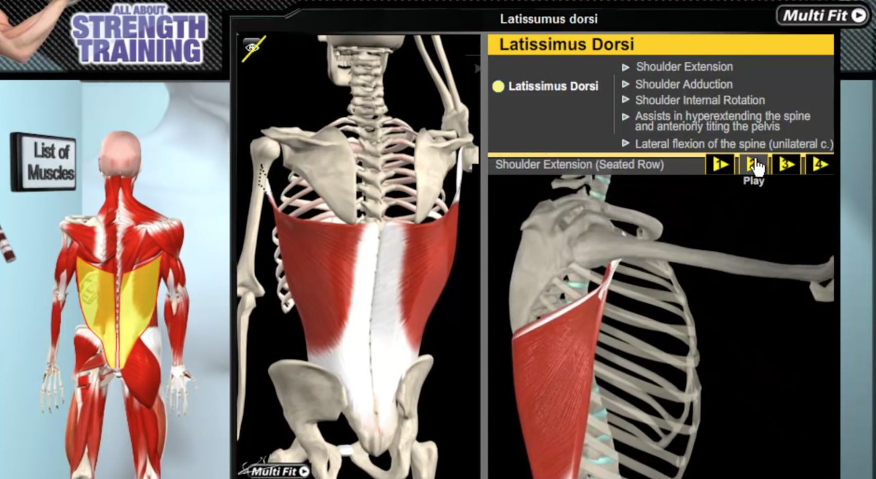 Latissimus Dorsi, el músculo más grande de la espalda (video con ...