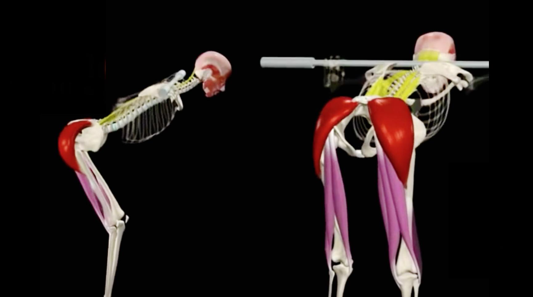 Anatomía del ejercicio \
