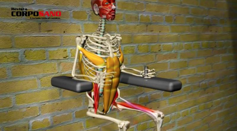 Anatomía de la elevación de piernas (video con animación)