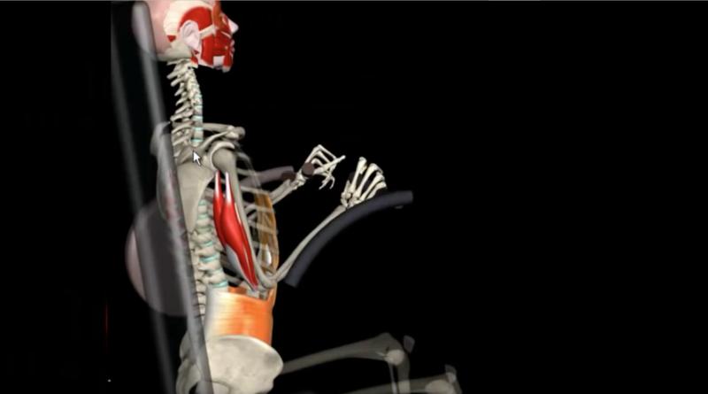 Anatomía de la extensión de tríceps y curl de pierna (video con animación)
