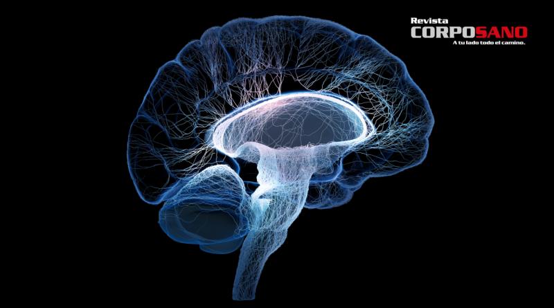 10 cosas que no sabías del cerebro humano