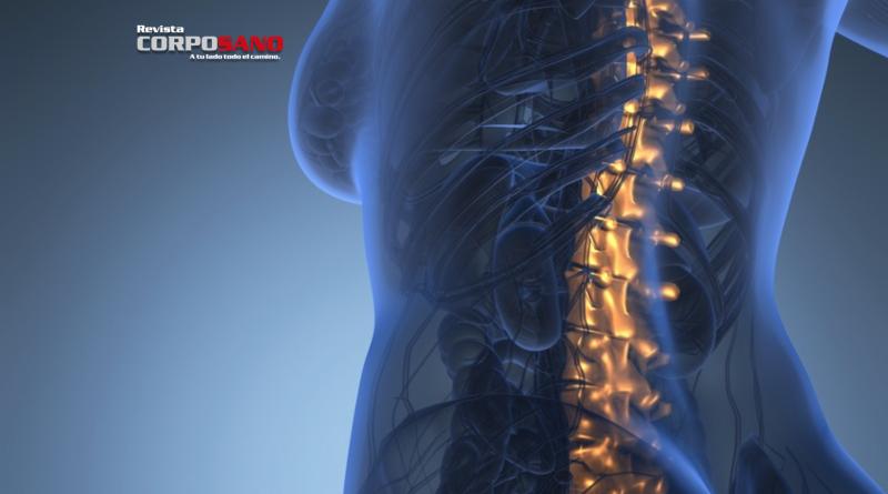 10 cosas que no sabías de tu espina dorsal