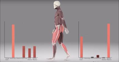 Trabajo de los músculos al caminar