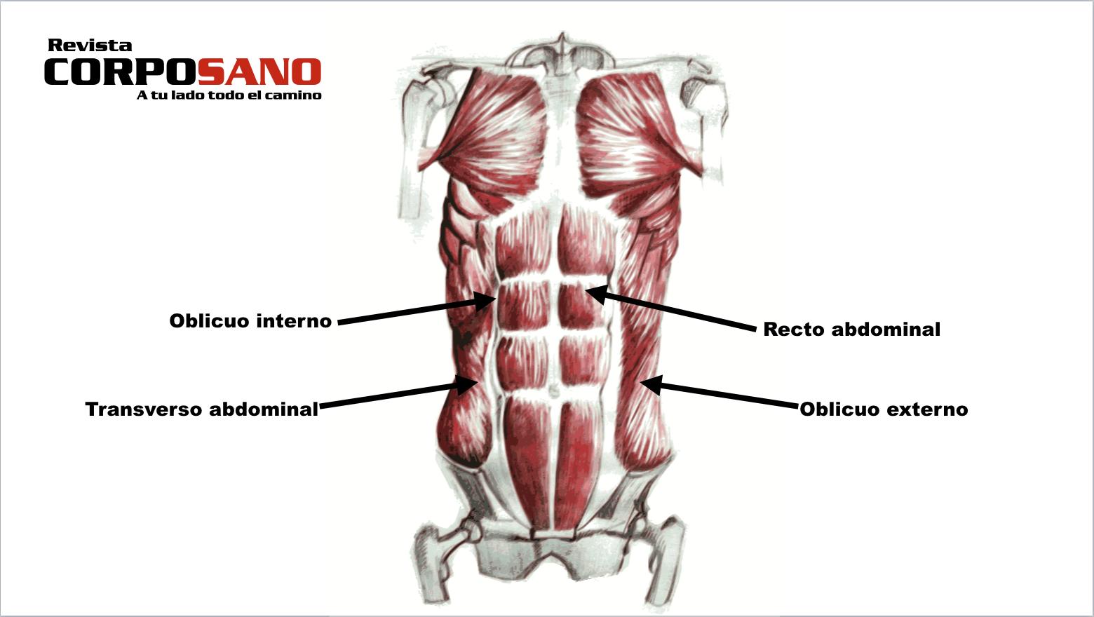 Tipos de músculos abdominales y cómo ejercitarlos - Revista CorpoSano
